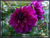 flowers_2015