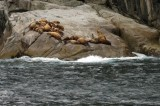 Don't they make rocks look comfy?  0051.jpg