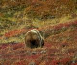 Image00639.BearBack-eh.jpg