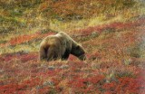 Image00640.Grizzly-EH.jpg