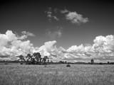 Big Cypress National Preserve & Everglades National Park
