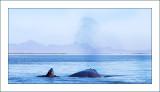 Ojo de Libre whales