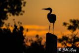 Great Blue Heron Sunset 5