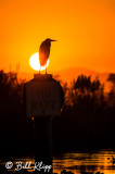 Great Blue Heron Sunset 2