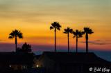 Sunset Palms  1