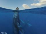 Humpback Whales Underwater  11