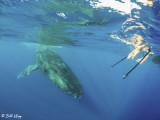 Humpback Whale Mugging  6
