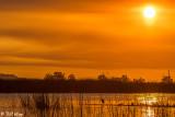 Great Blue Heron Sunset  8