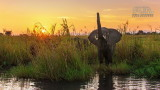 Wildlife - Zambia - Lower Zambezi - Olifant.jpg