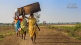 Mensen - Indië - Tadoba - Vrouwen.jpg