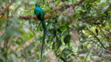 Wildlife - Costa Rica - San Gerardo de Dota - Quetzal.jpg