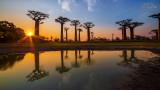 Landschap - Madagaskar - Avenue of Baobabs zonsondergang