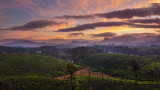 Landschap - India - Valparai - Zonsopgang theevelden