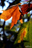 Touch of fall..