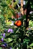 ..at the garden