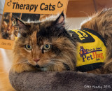 Therapy Cat - Cara Mia