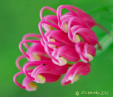 Tiny curvy flowers