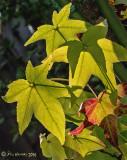 Green Backlit Leaves