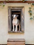 Personal Doggie Window