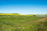 Pole Position -Prairie Colors