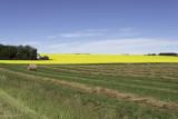 Sunny Day Farmscape