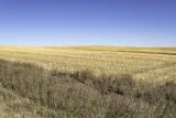 Sunlit Prairie