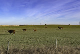 Grass Moowers