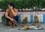 Monkey Performer