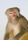 Monkey at Kowloon reservoir