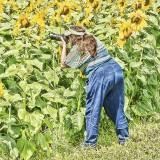sunflower butt