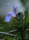 flora_macro