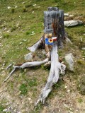 Tree stump with trail marker