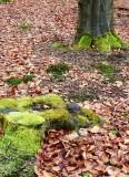 Mossy trunks