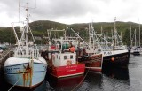 Harbour of Mallaig