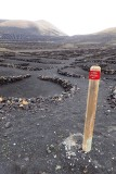 Volcanic vineyards