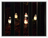 Penguins in Jail