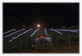 Vineyard showing Holiday spirit