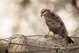Gallery: Birds of Prey