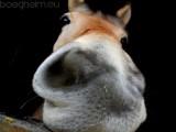 2014-03-22 Paard