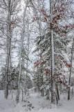 Late Fall Snow Fall