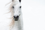 Horses / Pferde