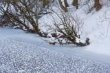 Les murmures de l'hiver