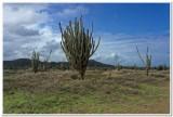 Interior cactus lands