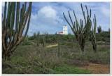 Interior cactus lands 2