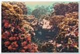 Coral garden on Klein Bonaire