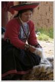 Preparing alpaca wool