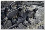Bad Boys of the Galapagos