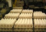 P1010013_eggs_8.jpg