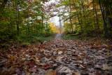 Michigan Fall