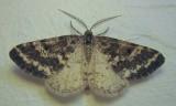 Eufidonia discospilata - 6639 - Sharp-lined Powder Moth